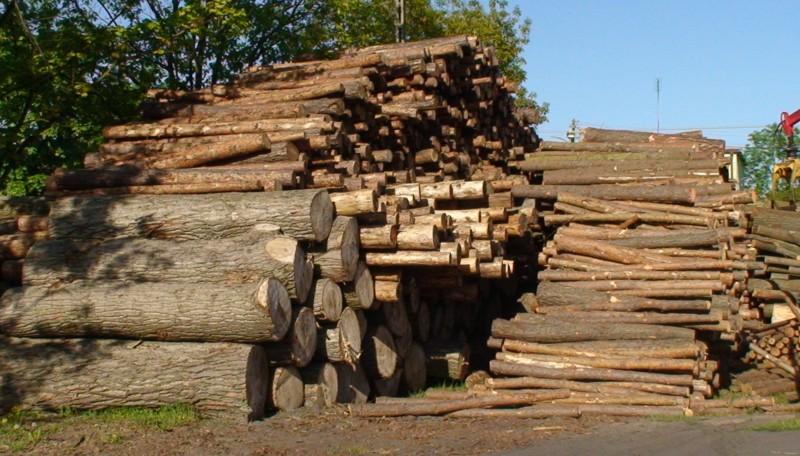 Kupić Drewno kominkowe brzoza