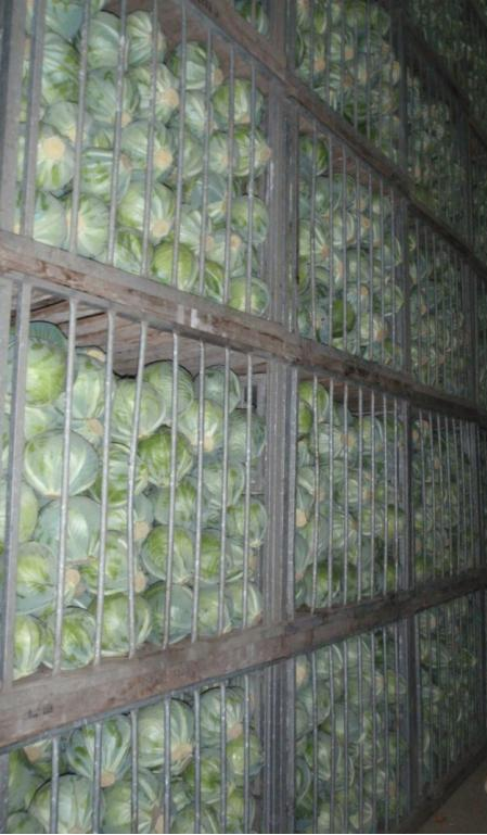 Kupić Ziemniaki jadalne, młode, wczesne
