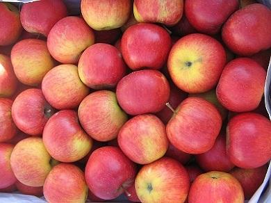Kupić Jabłka