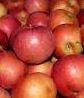 Kupić Jabłko Idared