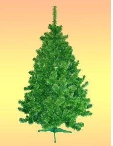 Kupić Sosna zielono- zielona 2,5