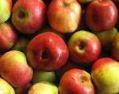Kupić Jabłka różnych odmian.