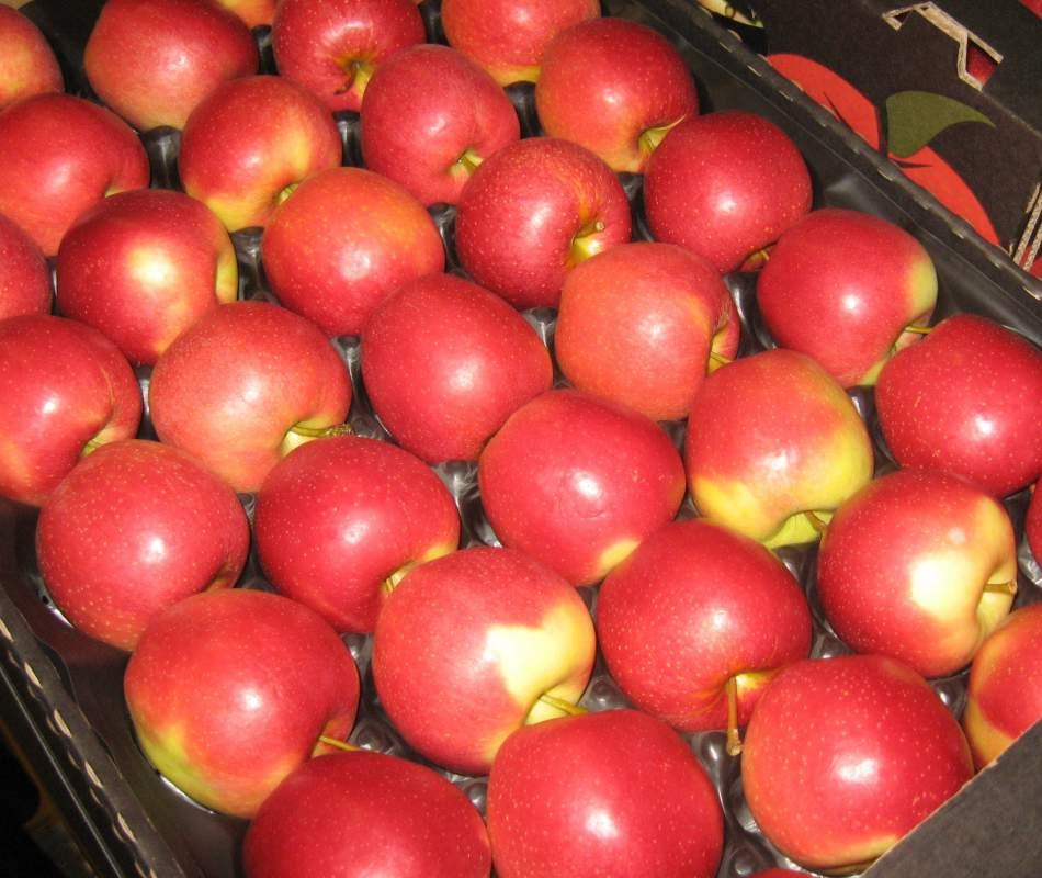 Kupić Jabłka odmiany Gala
