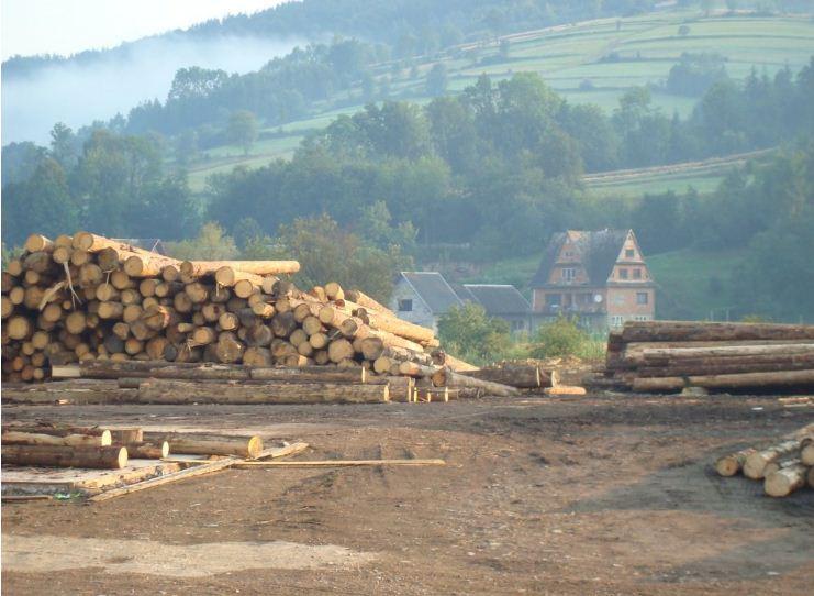 Kupić Tartak Pyrz oferuje drewno najwyższej jakości