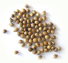 Kupić Kolendra - całe nasiona lub mielone