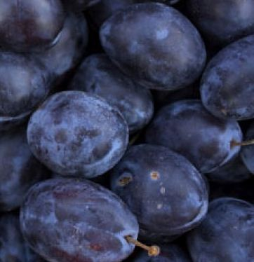 Kupić Śliwki najwyższej jakości. Doskonały, słodki owoc.