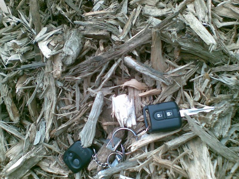 Kupić Biomasa drzewna na cele energetyczne