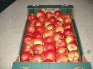 Kupić Oferta świeżych jabłek od producenta.