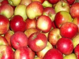 Kupić Świeże jabłka od producenta. Odmiana Idared.