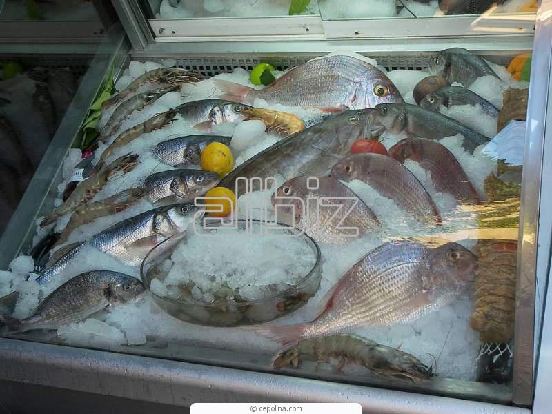 Kupić Ryby mrożone