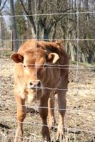 Kupić Siatki Cyclone - profesjonalne siatki do hodowli bydła, jeleni, danieli, bizonów, dzików itp.