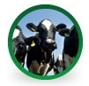 Kupić Pasze dla bydła.