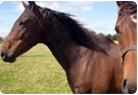 Kupić Pasze dla koni