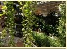Kupić Rośliny ogrodowe różne