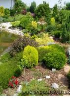 Kupić Ogród krajobrazowy skalny