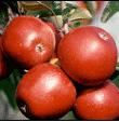 Kupić Owoce