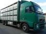 Kupić Samochody ciężarowe
