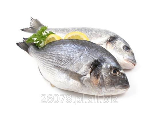 Kupić Ryby świeże