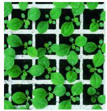 Kupić Substraty do siewu i pikowania roślin balkonowych