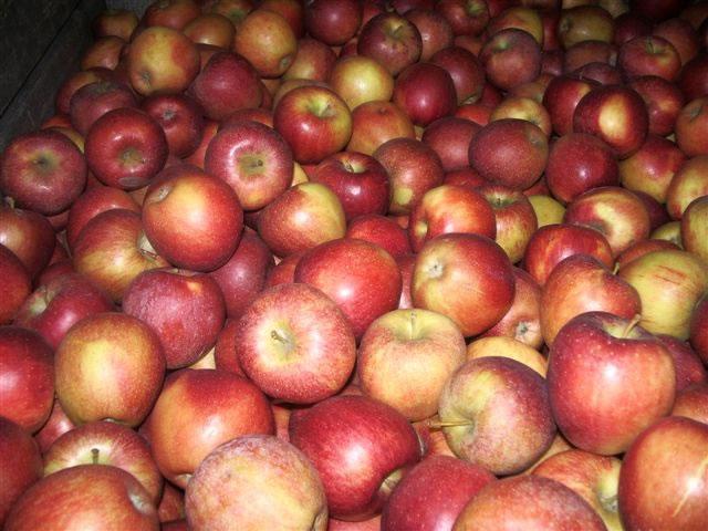 Kupić Jabłka.
