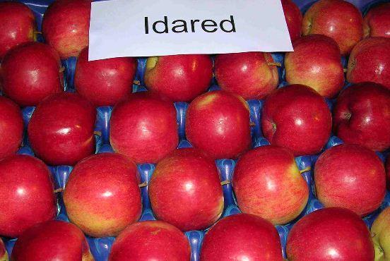 Kupić Idared- jabłka świeże.