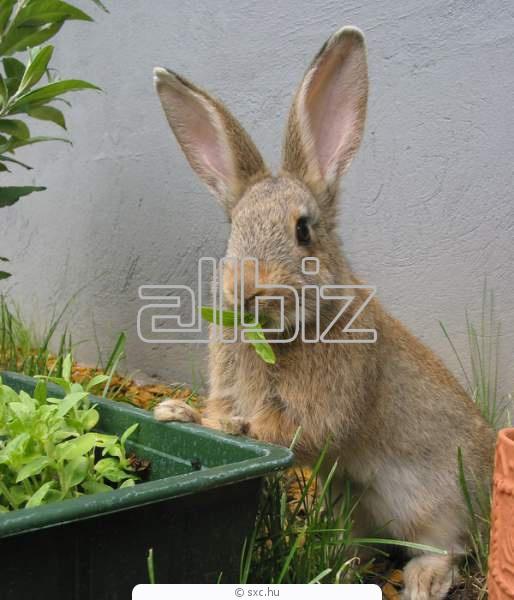 Kupić Pasze dla królików
