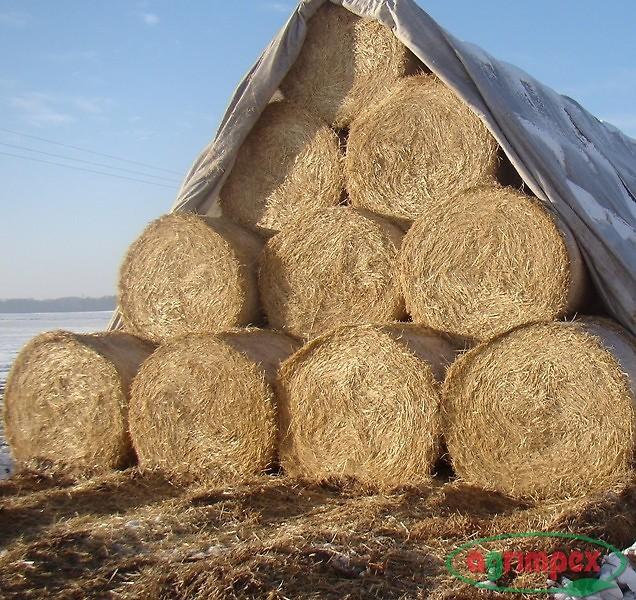 Kupić Agrowłóknina puszysta 110g/m2