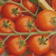 Kupić Pomidory miąższowe
