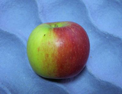 Kupić Jabłka świeże Idared