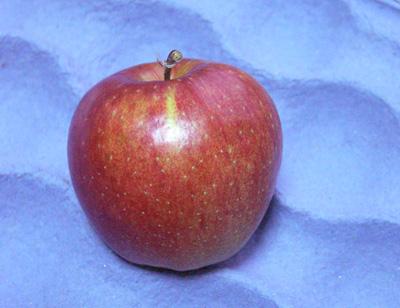 Kupić Jabłka świeże Jonagored