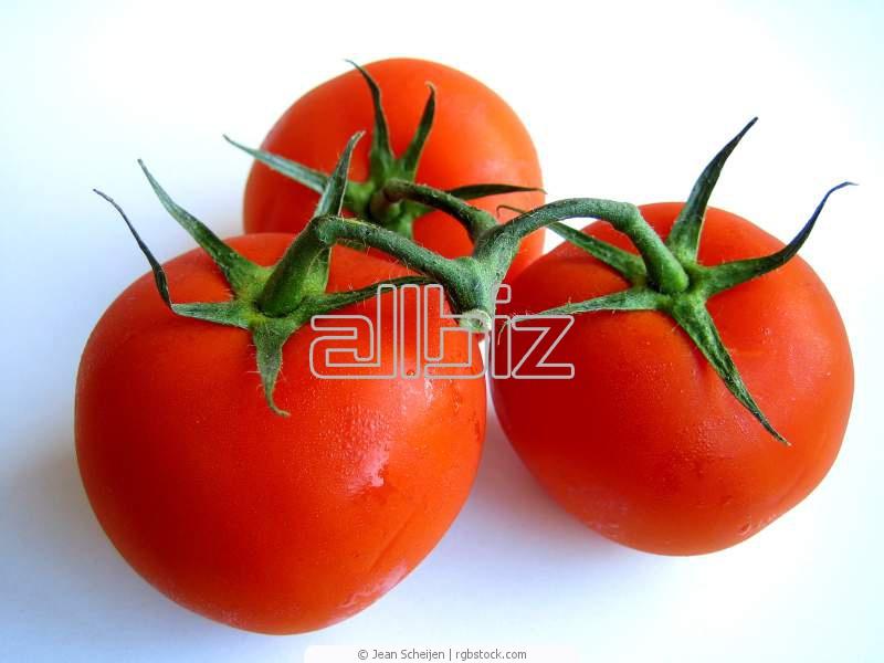 Kupić Pomidor