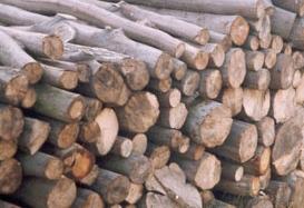 Kupić Drewno opałowe, kominkowe, wysokiej jakości.
