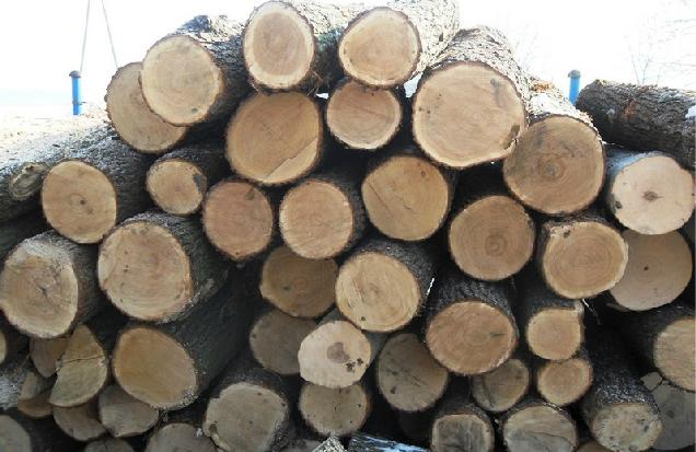 Kupić Drewno opałowe, kominkowe