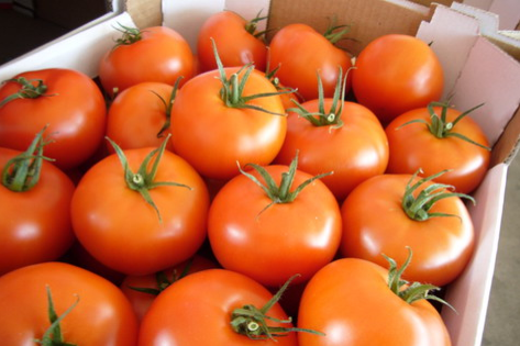 Kupić Pomidory klasa I