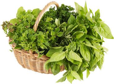 Kupić Świeże zioła