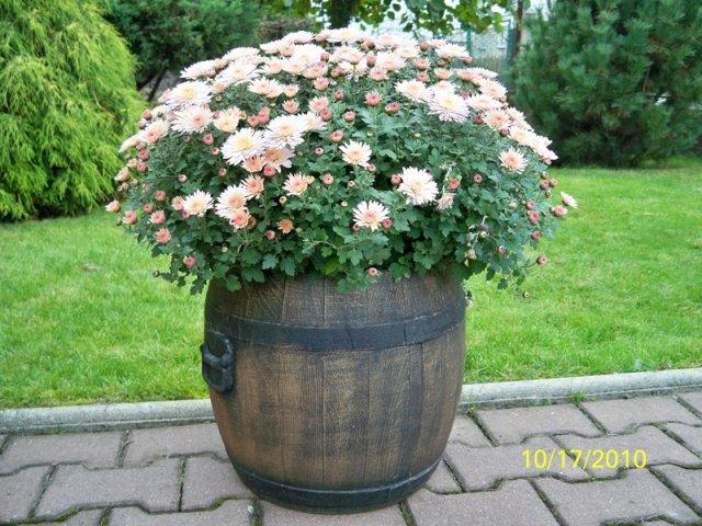 blument pfe f r drau en in bielsko biala polen kaufen. Black Bedroom Furniture Sets. Home Design Ideas