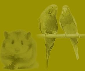 Kupić Karma dla ptaków i gryzoni