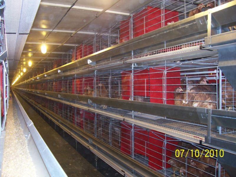 Kupić Sprzęt i klatki do hodowli ptaków