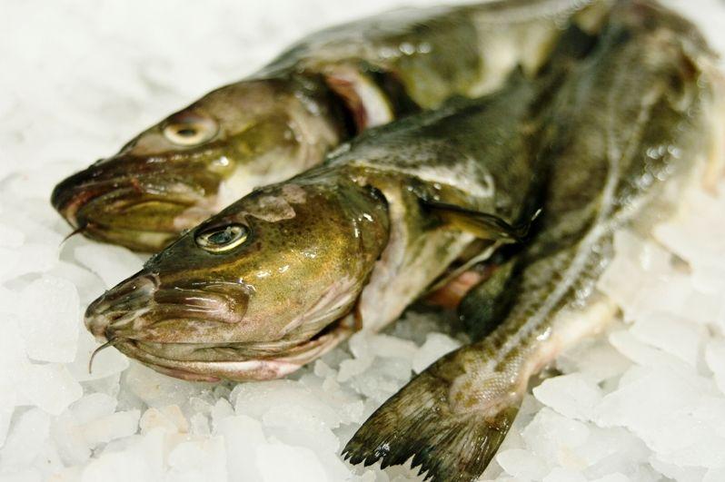 Kupić Ryby morskie