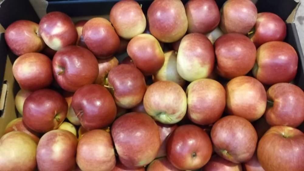 Kupić Jabłka świeże z Polski