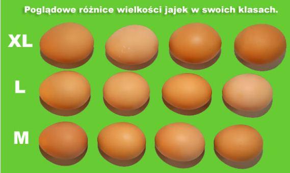 Kupić Jaja spożywcze