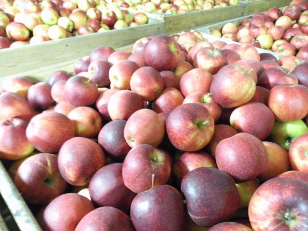 Kupić Jabłko Jonagored