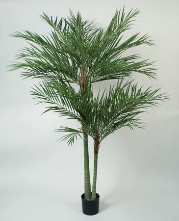 Kupić Areca Palm 66-210