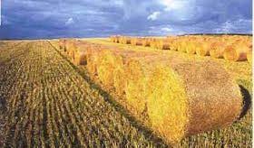 Kupić Biopaliwo