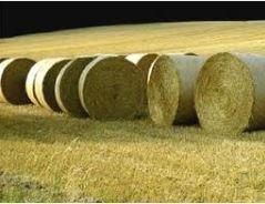 Kupić Biomasa- paliwo ekologiczne