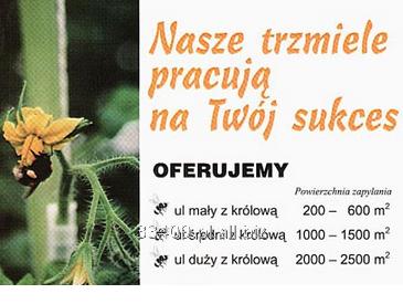 Kupić Trzmiele do zapylania roślin dostępne w ulach z królową.