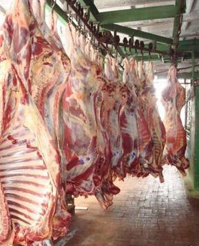 Kupić Mięso wołowe półtusze schłodzone.