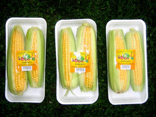 Kupić Kukurydza żywnościowa świeża