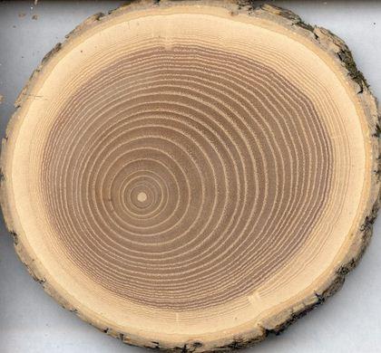 Kupić Drewno okorowane brzozowe