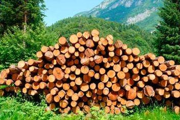 Kupić Drewno bukowe twarde